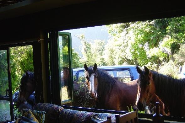 Ein Foto von Victors Pferden, das ich von seinem Profil gemopst habe.